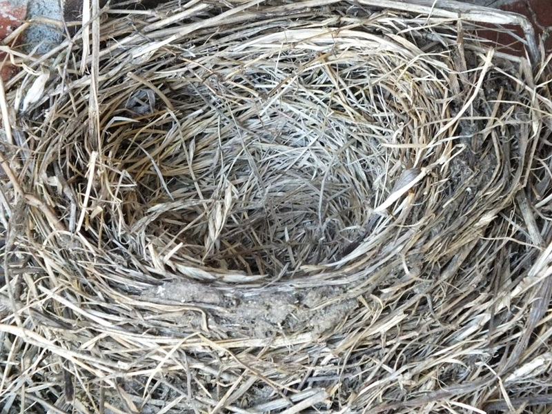 Nature Empty Nest Robin's Nest Empty Bird Nest